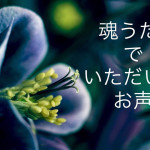 http://adonomori.hp-tsukurumon.jp/wp-content/uploads/sites/3743/2016/12/header20161229214950_745106328.jpg